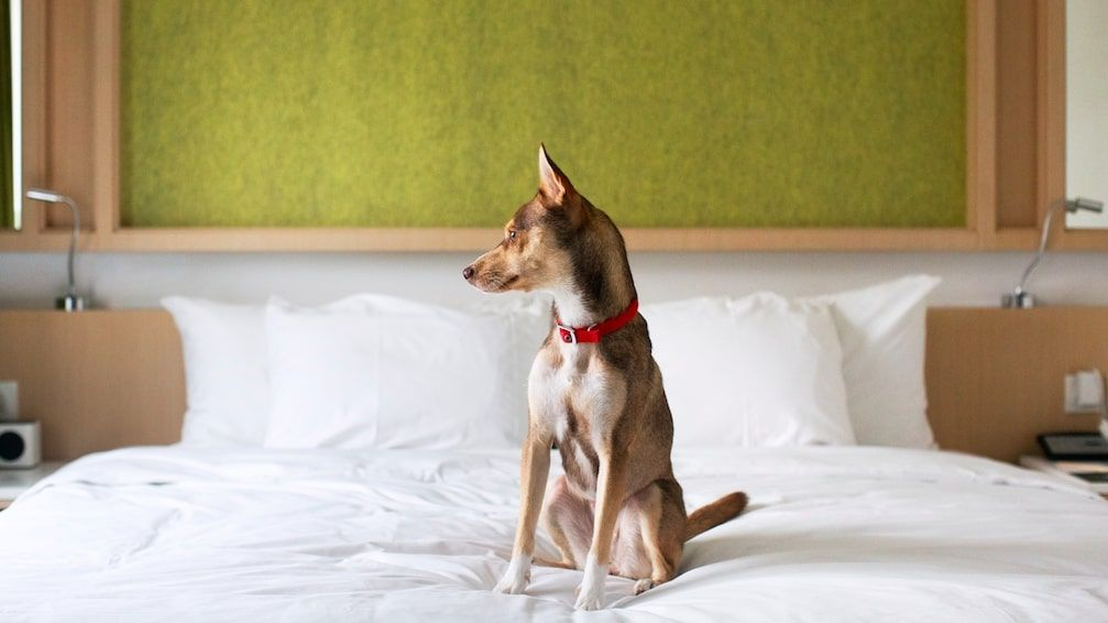 逸東酒店曾推出「毛孩宿一宵」 Dog Fur-iendly Staycation 寵物友善酒店計劃