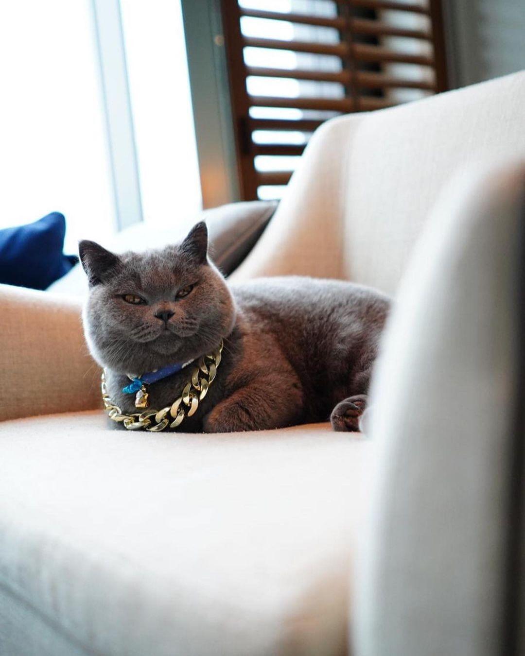 瑰麗酒店沙發與貓
