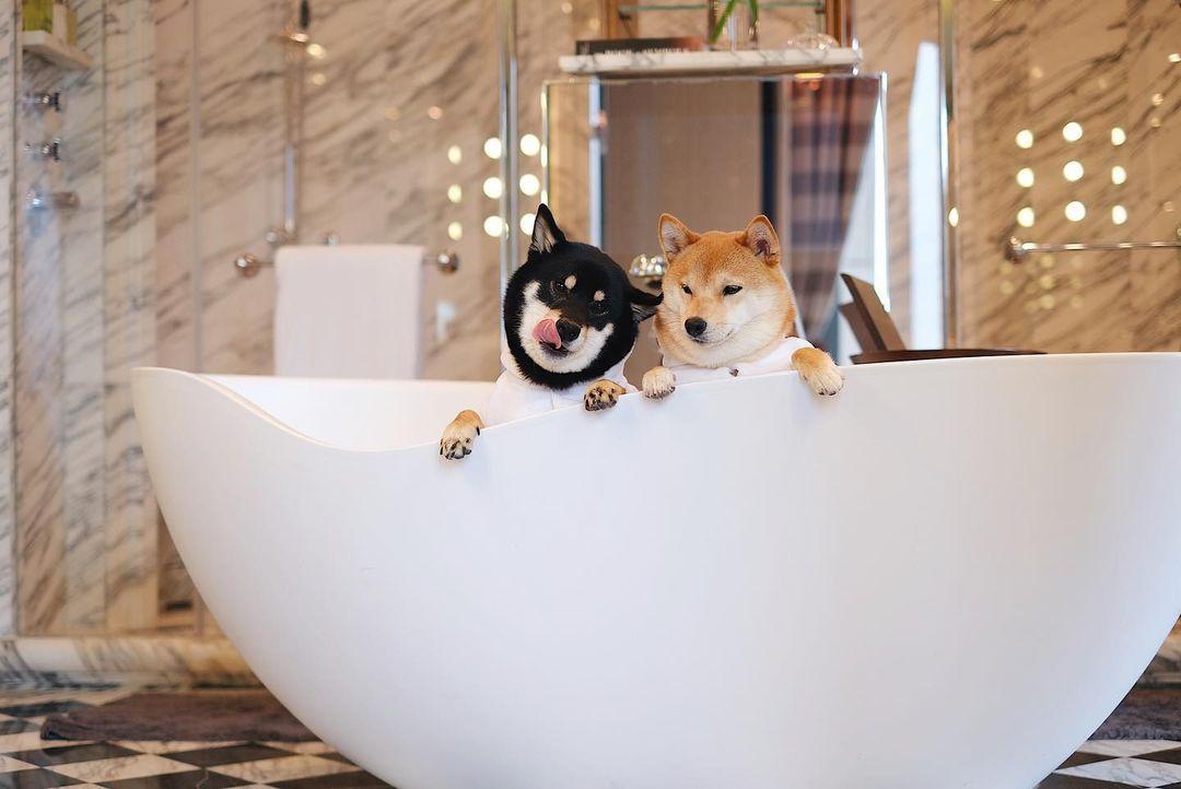 瑰麗酒店浴缸與狗