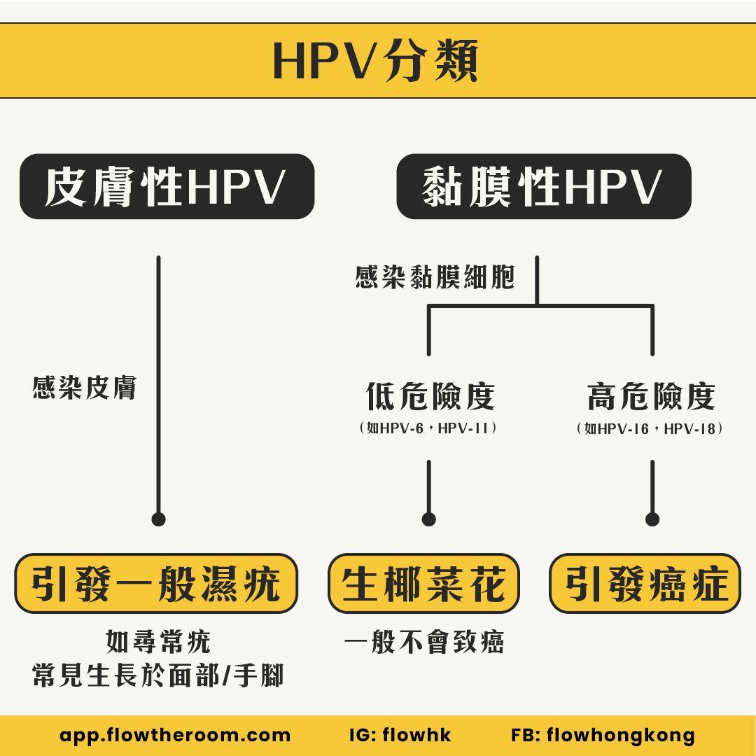 HPV分類-皮膚性HPV-黏膜性HPV-分別-高風險HPV-低風險HPV