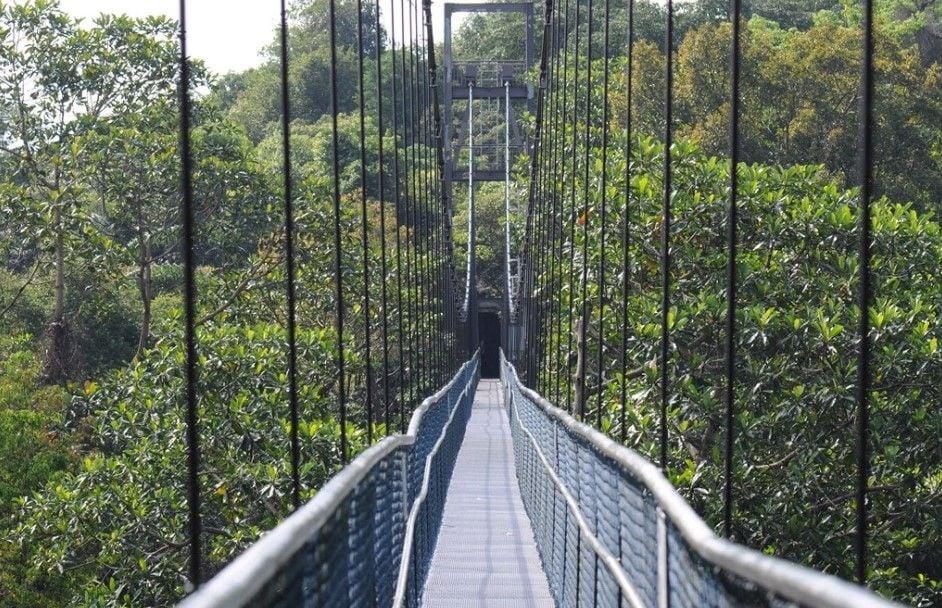 Treetop Walk at MacRitchie Reservoir Park (Credit: Flickr @letisha81)